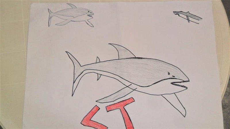 shark-tank-Small